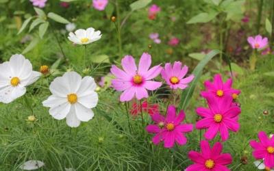 De zomertips 2018 voor in de tuin